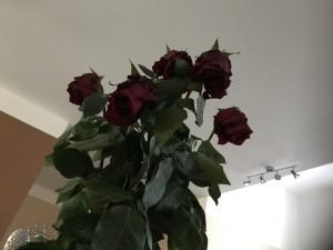 uvadlé růže